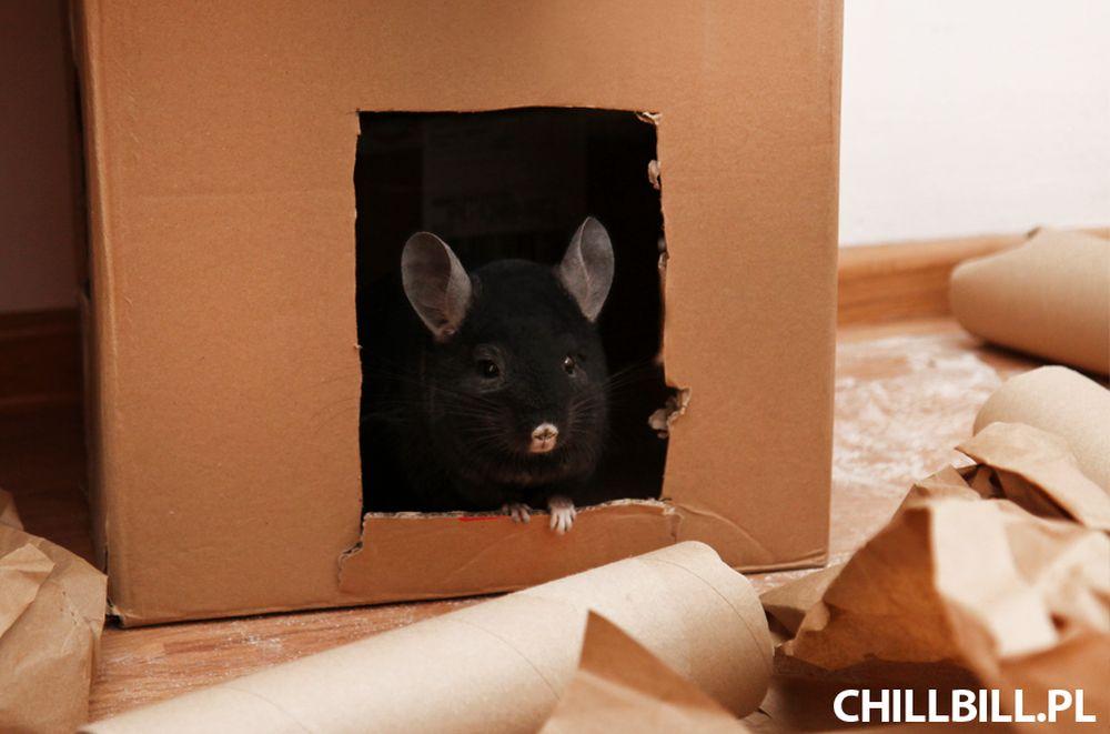 Kartonowa Forteca - szynszyle - chillbill