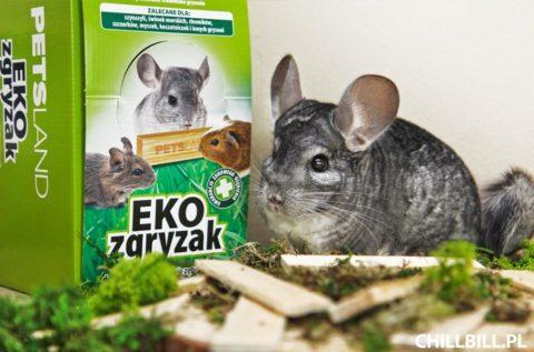 Recenzja EKOzgryzaka firmy PetsLand - ekozgryzaki - szynszyle - chillbill