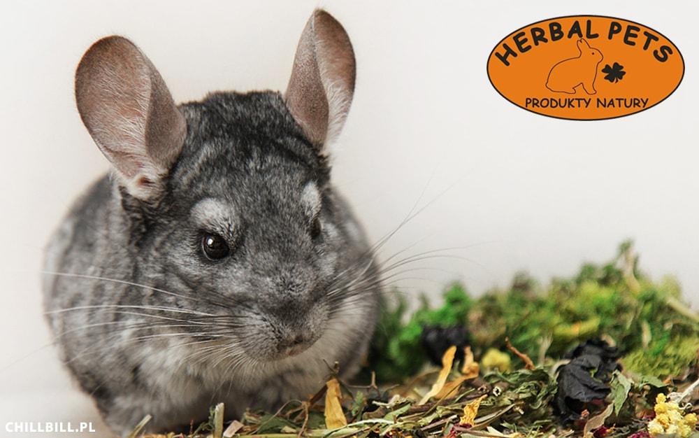 Recenzja Gryziółka od Herbal Pets - gryziółka - chillbill - zioła - dla - szynszyli