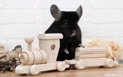 Zabawki dla szynszyli - czy szynszyla naprawdę ich potrzebuje