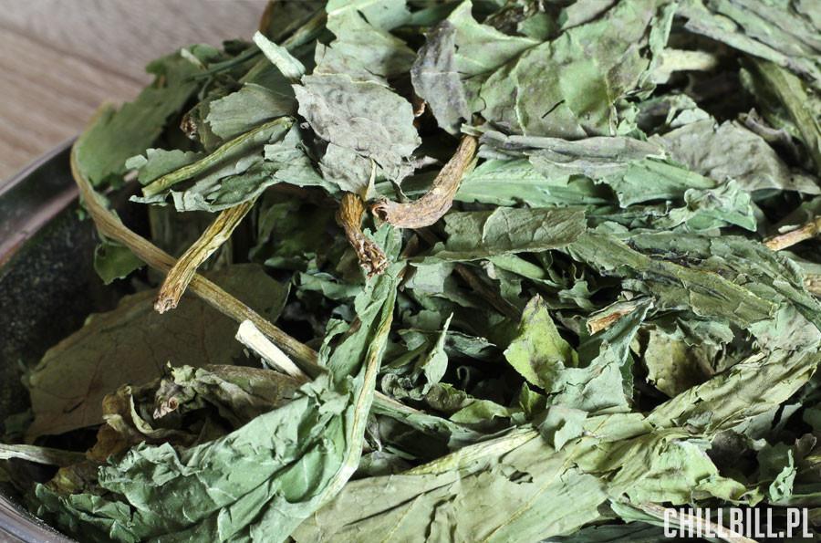 liście mniszka lekarskiego od zielnik szczęśliwego gryzonia