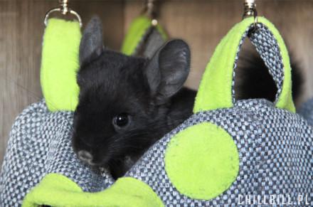 mebelki do klatki dla gryzoni i królików