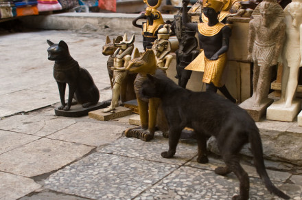koty w Egipcie