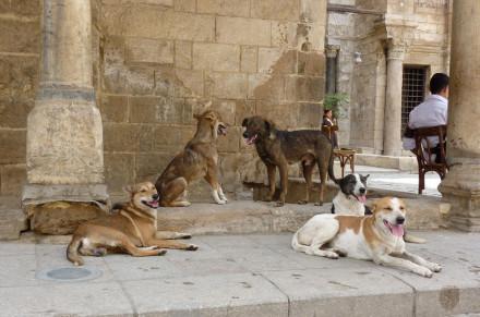 zwierzęta w Egipcie